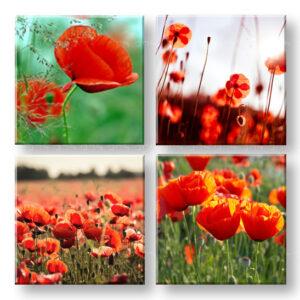 Vászonkép Meadow of poppy poppies 4 részes XOBKOL17E42
